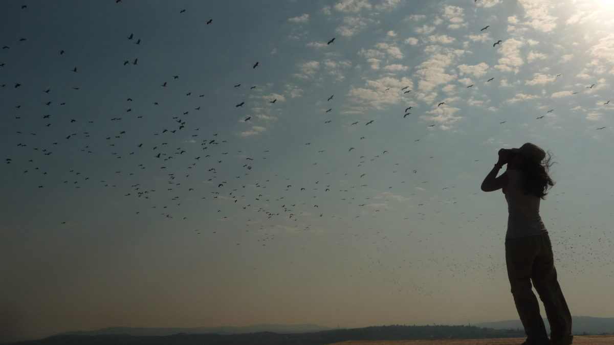 Witnessing thousands of White Storks migrating overhead is an unforgettable spectacle © Steffen Oppel